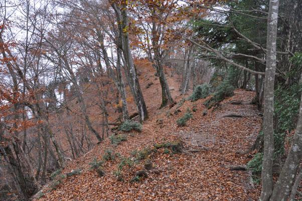 1000m越える小持山、大持山の稜線付近は落葉して寂しい感じです