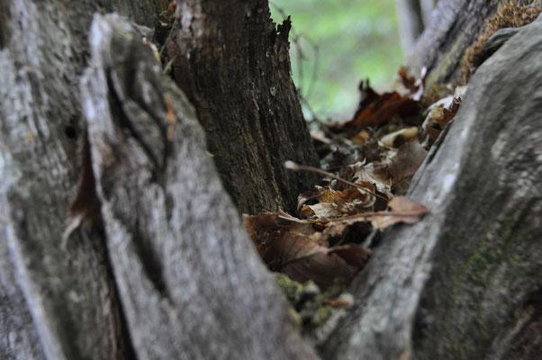避けた木間に積もった落ち葉