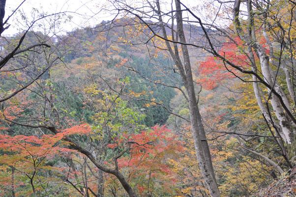 まだ標高が低いところでは紅葉が見頃です