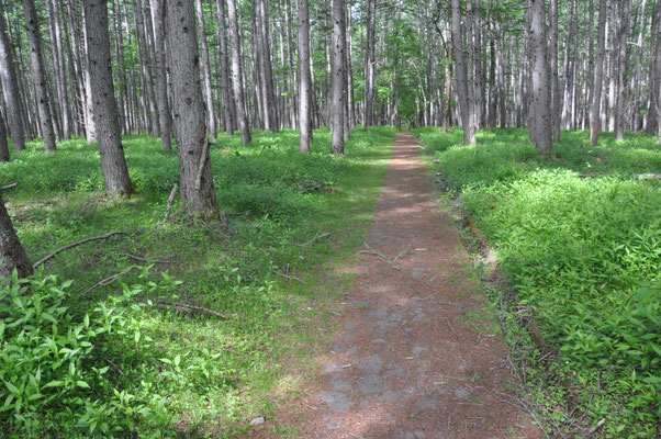 こんな気持ち良い森を歩いていきます