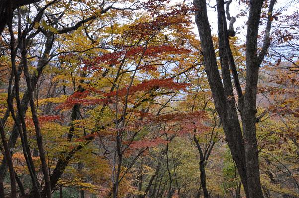 標高1000m以下では紅葉まだ見頃です