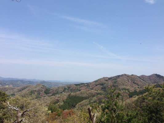 展望台からの眺め。山肌のピンクがまだ楽しめました