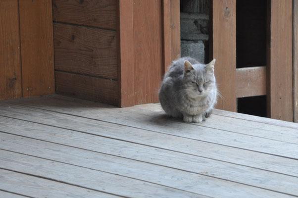 神社の守り猫。
