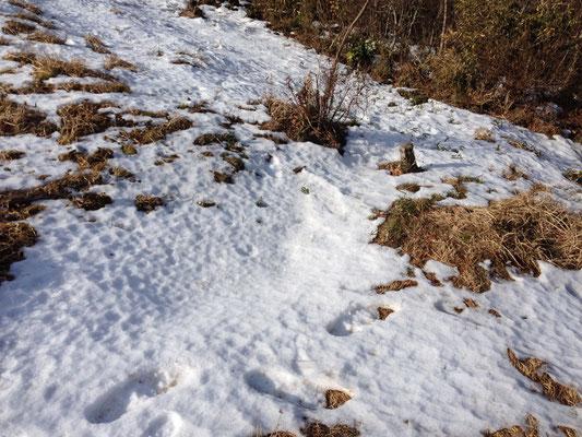 まだちょっとだけ雪残っていました