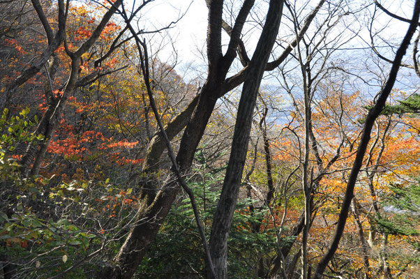 自然研究路東側の紅葉綺麗でした①