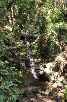 静かな森&沢沿いを歩きます