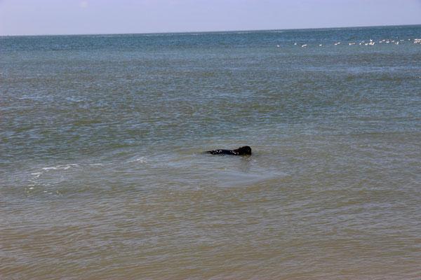 Im Salzwasser kann man prima schwimmen