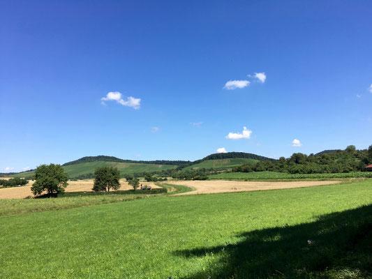 Blick in die schöne Weinberg Landschaft