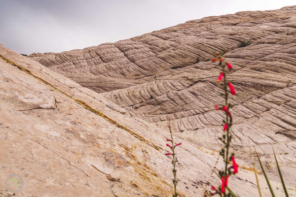 das White Rock Natural Amphitheatre im Norden des Parks