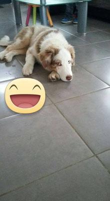 Laskar le jour de son arrivée dans sa nouvelle demeure - 04/10/2015