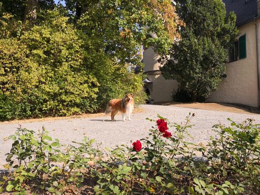 Im Park Schloss Rosenau