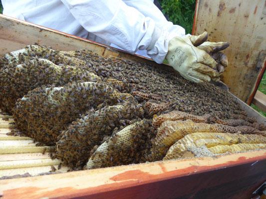 Blick vom Honigbereich auf die BiKi