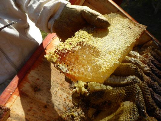 Honigernte aus der BiKi Mitte April