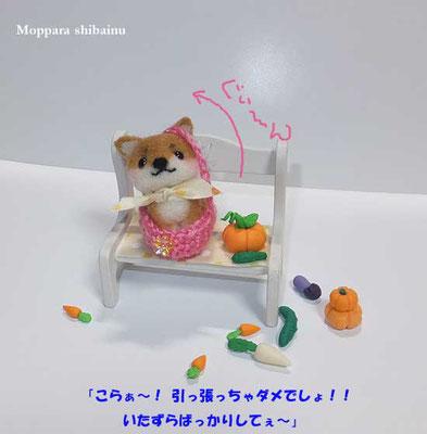 無理矢理編みカゴに入る柴犬さん