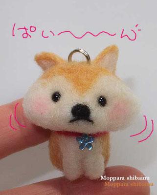 ほっぺポヨン♪の柴犬さん