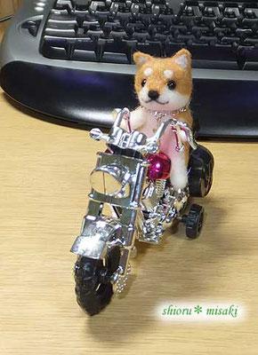 バイク乗り柴犬さん