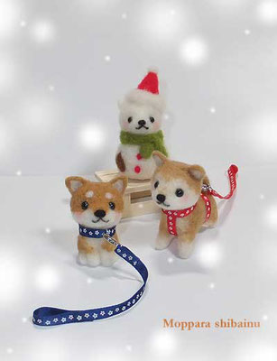 冬のお散歩柴犬さん