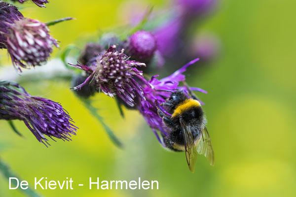 De Kievit - Harmelen 02 June 2019