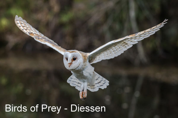 Workshop roofvogelfotografie - Diessen - 23 March 2019