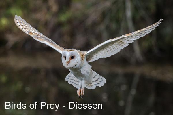 Workshop roofvogelfotografie - Diessen - 23 March 2019
