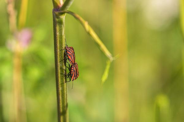 Libellenreservaat Zoetermeer