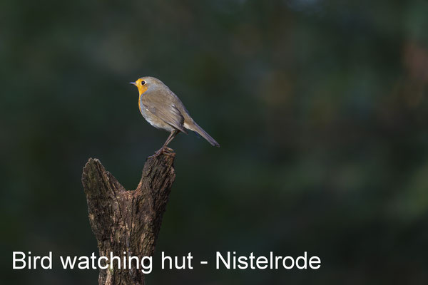 Vogelhut Nistelrode - 26 October 2019