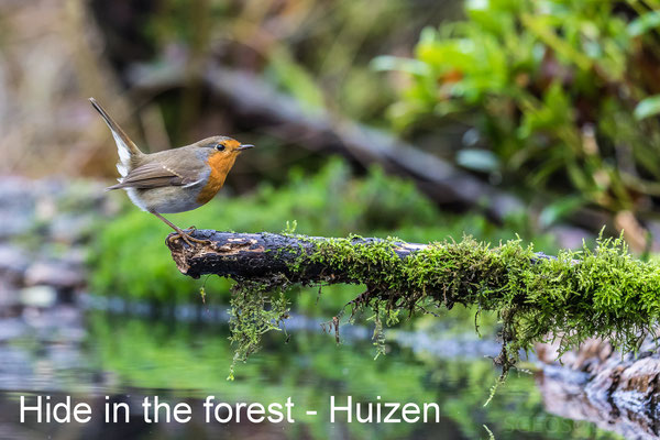 Hide in the forest - 22 Dec 2018