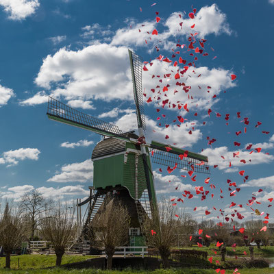 Molen Gorinchem - confetti - april