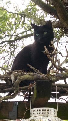 Lotje, kat van een hexe
