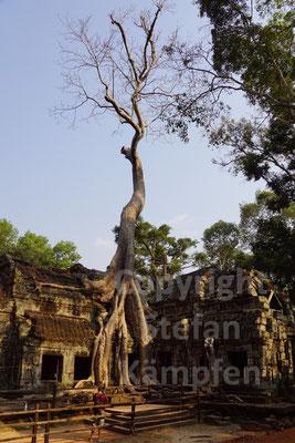 In den Tempeln von Ta Prohm holt sich die Natur ihr Terrain zurück
