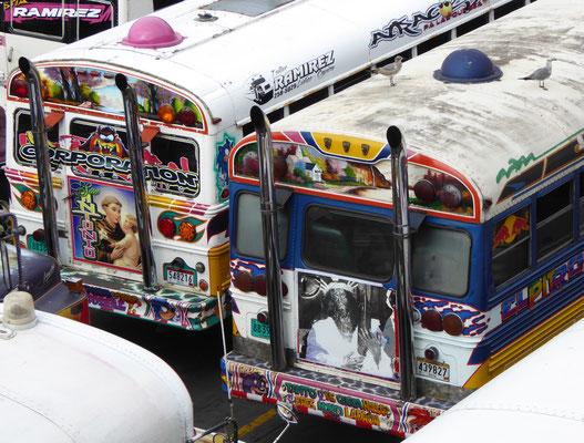Hinteransicht des »Chicken« Bus