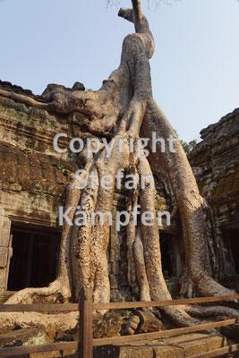 Die von Baumwurzeln überwucherten Tempel von Ta Prohm dienten als Filmkulisse für Tomp Raider