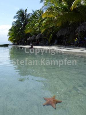Nomen est Omen an der Playa Estrella in Bocas del Toro