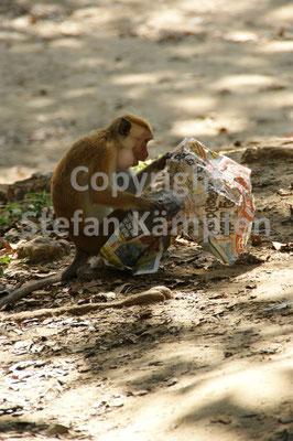 Auf Affen müssen auf dem neusten Stand bleiben