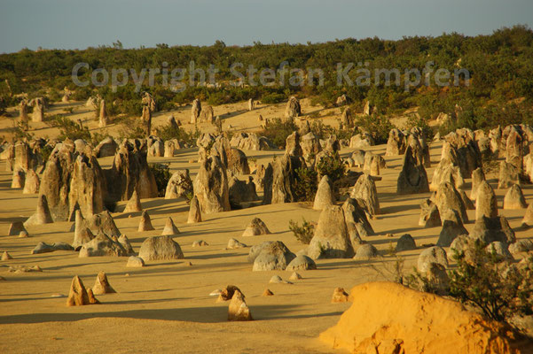 Zackige Schönheit: Die Pinnacles im Nambung Nationalpark