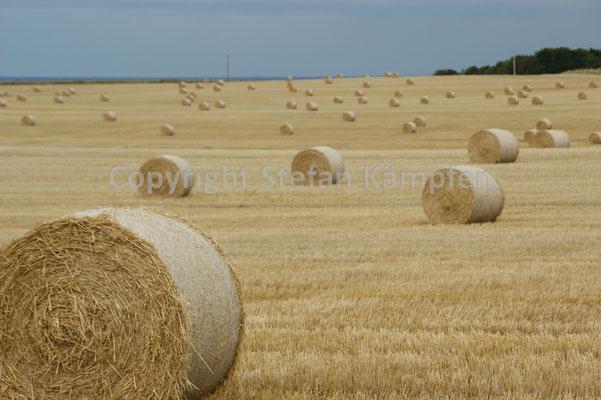Agrares Stilleben in der Nähe von St Andrews