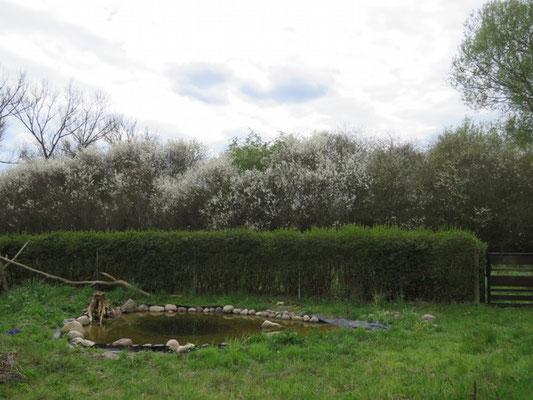 Der Teich Mitte April
