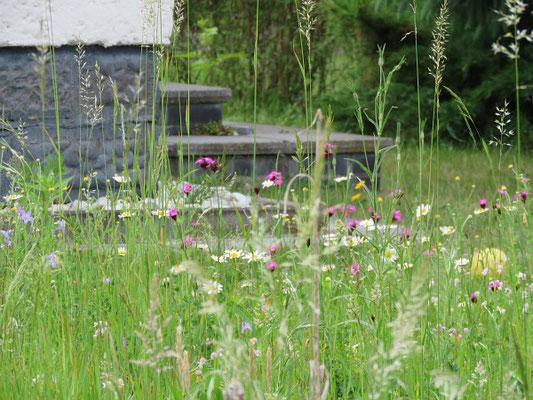Wildblumenwiese Ende Mai am Hauseingang
