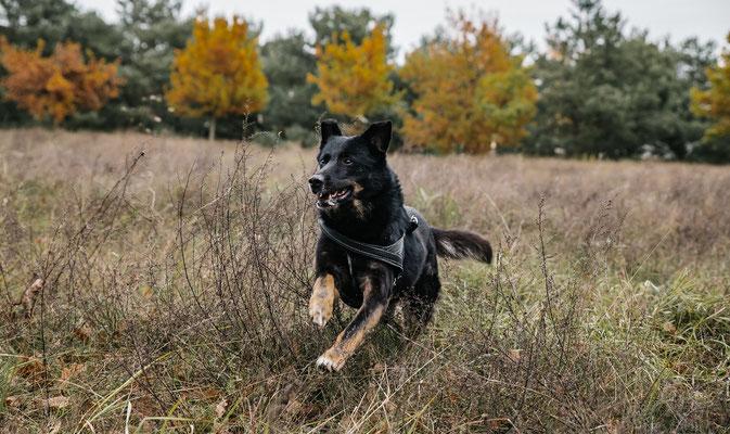 Laufen im Landschaftspark Adlershof Bildstrecke mit Hundeschule Hundekompass Trainerin Anna Ostrowska Hundefotografie Berlin