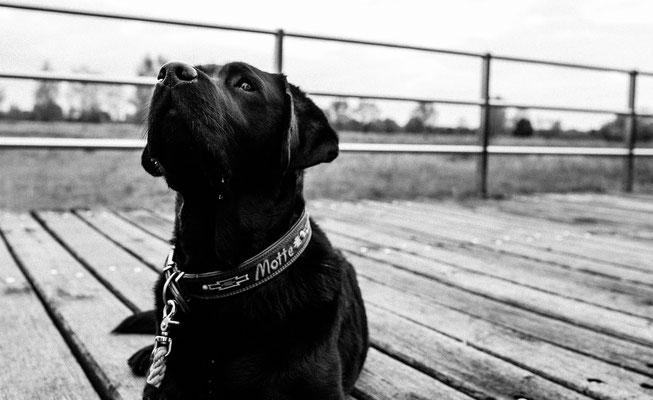 Schwarz weiß Bildstrecke mit Hundeschule Hundekompass Trainerin Anna Ostrowska Hundefotografie Berlin