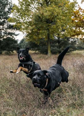 Laufen im Landschaftspark Adlershof Bildstrecke mit Hundeschule Hundekompass Trainerin Anna Ostrowska Hundefotografie Berlin  2