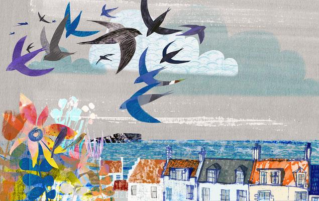 "Jill Calder Illustration - Children's Illustration - ""Swifts: How Deft We Are"""