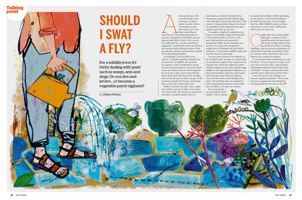 Jill Calder Illustration - General Illustration - BBC Wildlife Magazine
