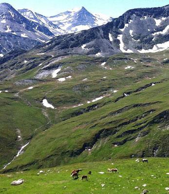 eine Pferdefamilie im österreichischen Alpenidyll