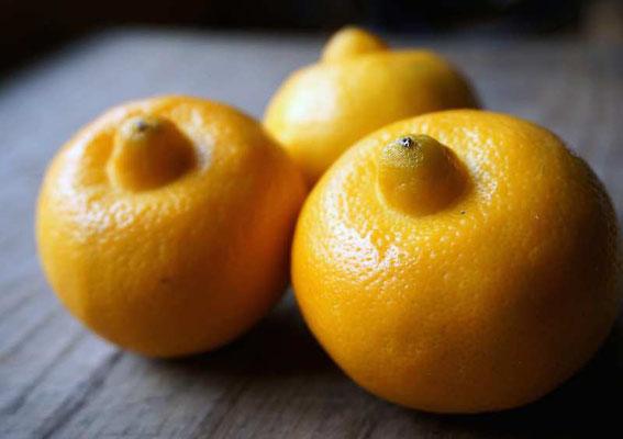 Bergamotte-Zitronen aus dem Piemont