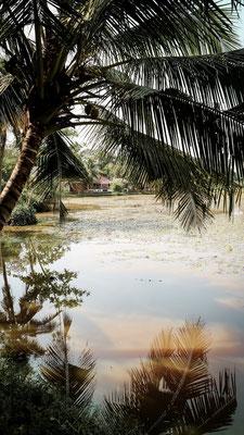 Palmenspiegelung im Wasser