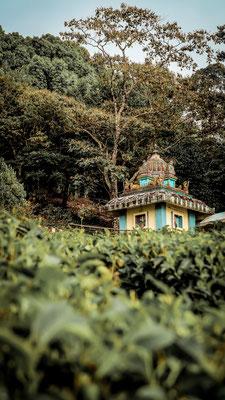 Munnar, Indien