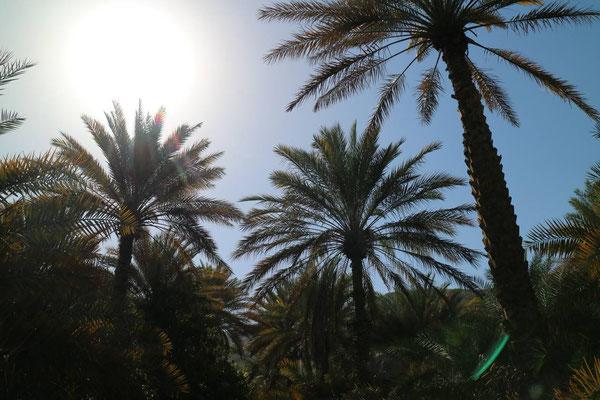 Palmen, Oman