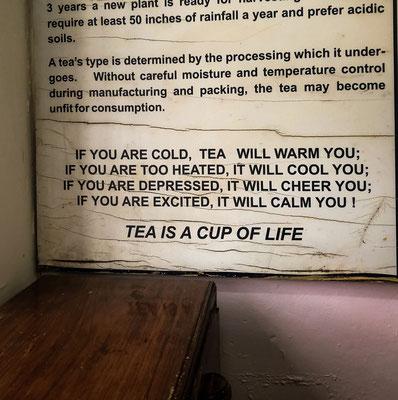 Teefabrik Munnar, Indien