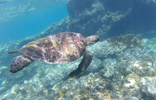 Dauin Coast, Philippinen